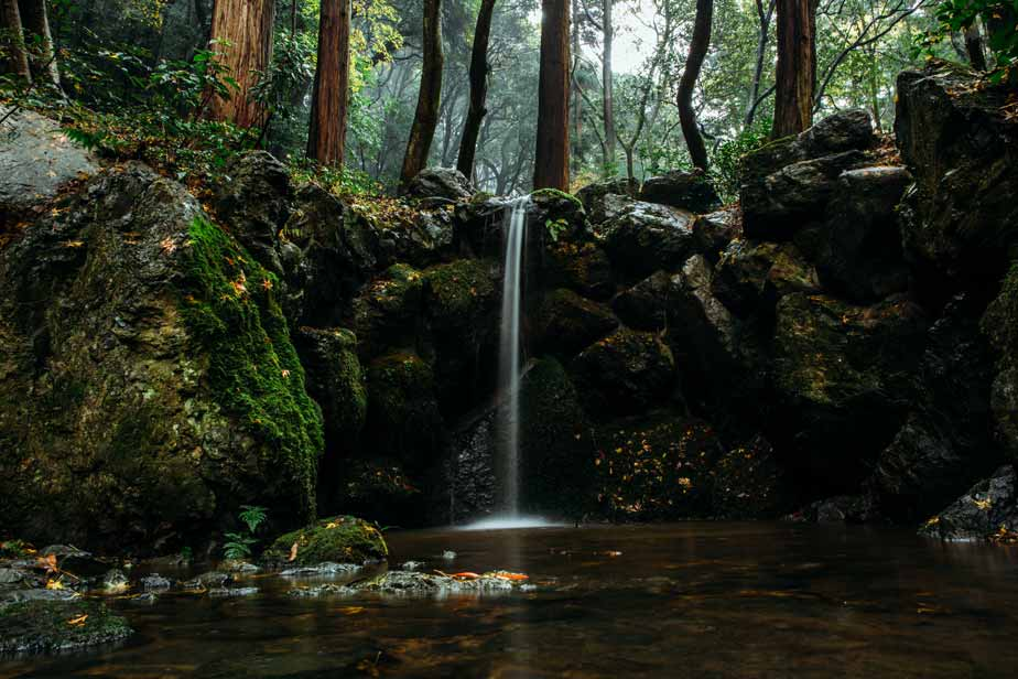 Forest waterfall | Jill McCubbin Clare Acupuncture & Yoga Therapy