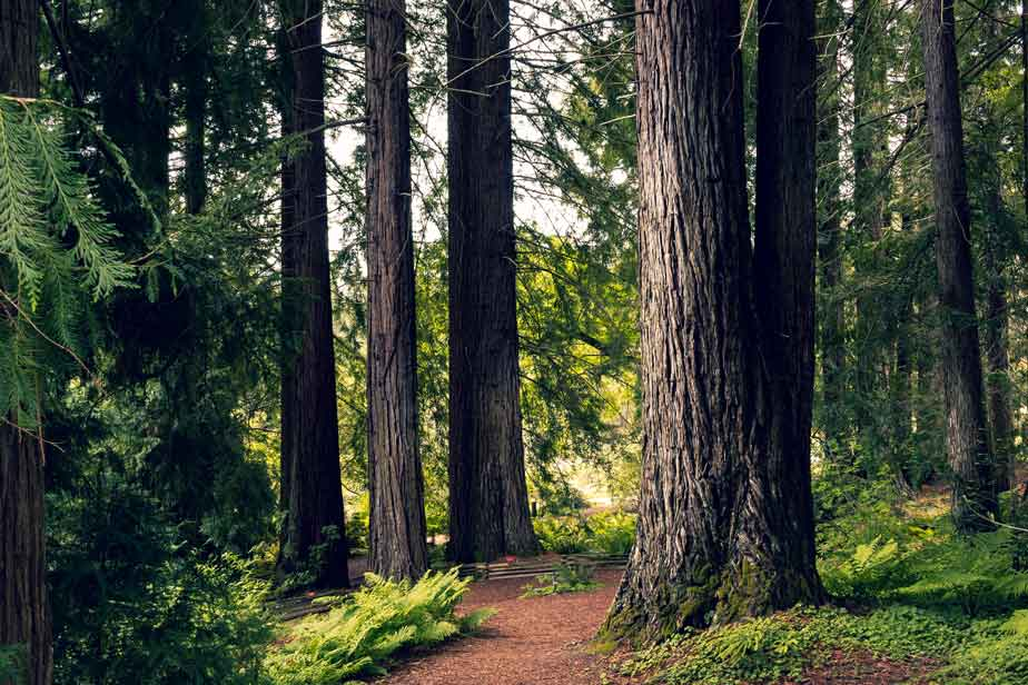 Relaxing forest trail | Jill McCubbin Clare Acupuncture & Yoga Therapy